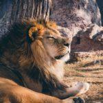 LION BLOGテーマのスタイルガイド